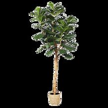 Ficus artificiel.png