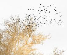 Papier panoramique oiseaux.png
