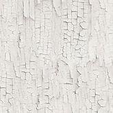 Papier peint ecorce blanche.jpg