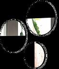 3 miroirs ronds verre noir.png