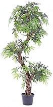 Fruticosa arbre.jpg