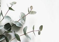 papier peint eucalyptus.jpg