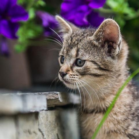 PetPhotography07.jpg