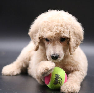 Peaches loves to play ball