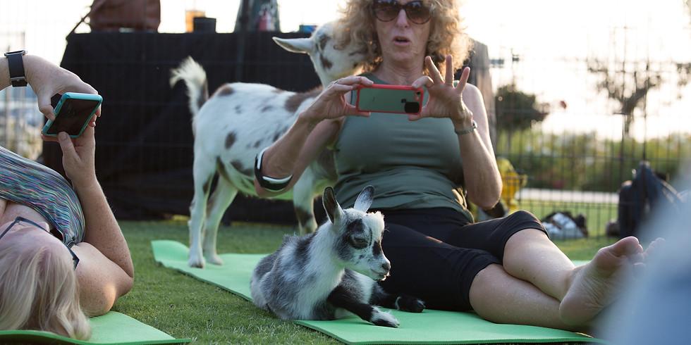 Fresno County - Goat Yoga & Mimosas 8:30 a.m.