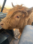 Tinkerbelle at the feed cart