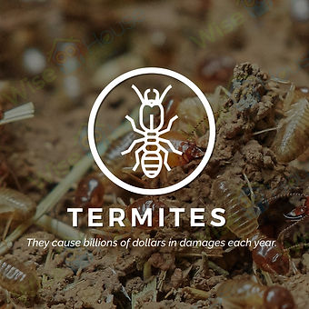 Termite company in Boynton Beach.JPG