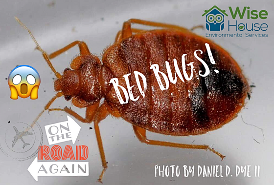 How to Spot Bed Bugs While Traveling This Holiday Season.