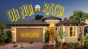 Rodent Control Tips for Boynton Beach Residents and All of Palm Beach County.