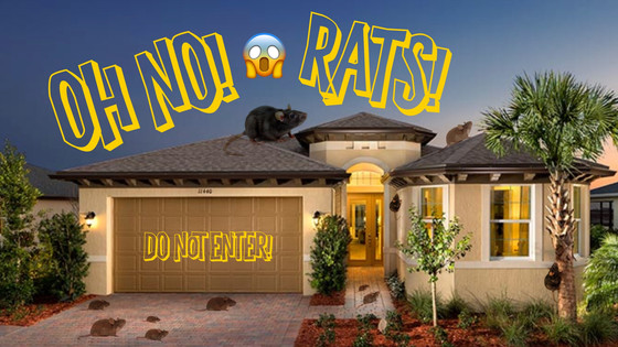 Rats Bite! Rat Diseases, Rat Infestations, And Rat Prevention.