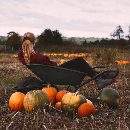 It's Pumpkin Season, Baby!