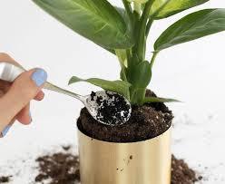 Daržas ant palangės  –  trąša iš kavos tirščių