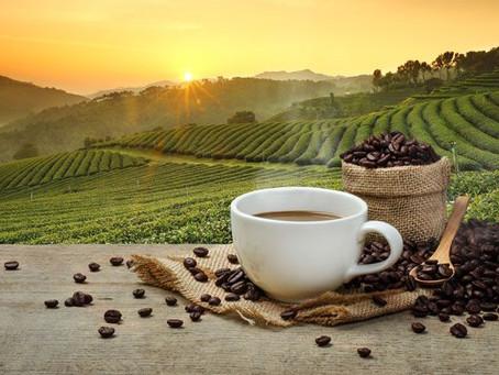 Kava – keleivė iš Etiopijos