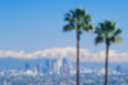 171002-los-angeles-palm-trees-feature-1.