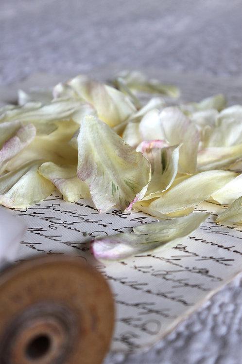 Tulip Petal Box