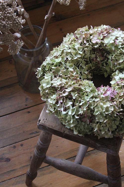 Autumn Green Hydrangea Bloomer