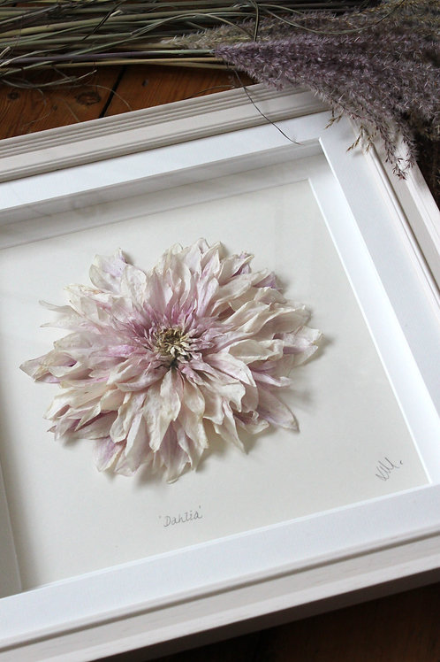 Box Framed Dahlia 'Cafe au Lait'