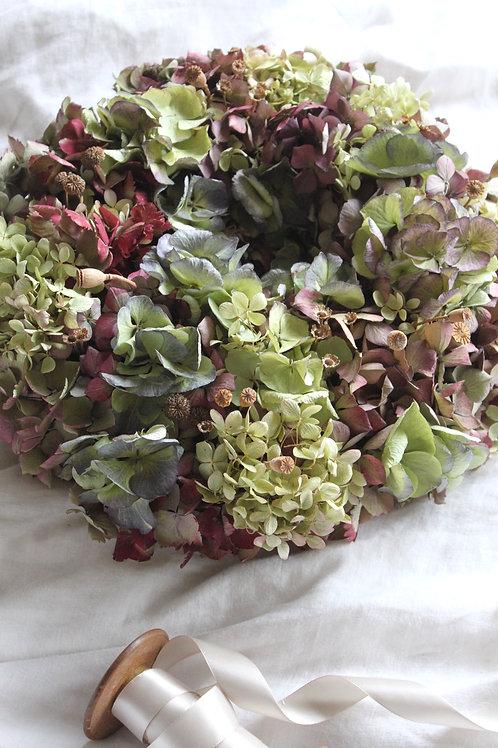 Hydrangea Bloomer 'Bright & Beautiful'