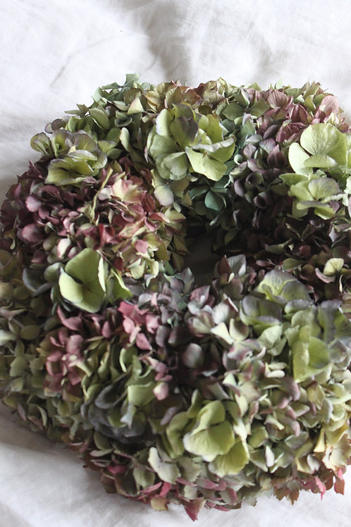 Hydrangea Bloomer 'Green and Mauve'