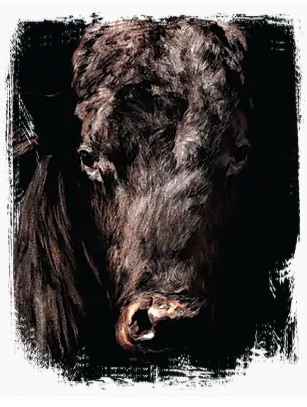 Snake Creek Cattle Company Pastured Beef