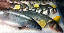 Our fresh fish selection