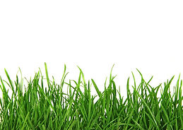 bigstock-Grass-On-White-Background-15613