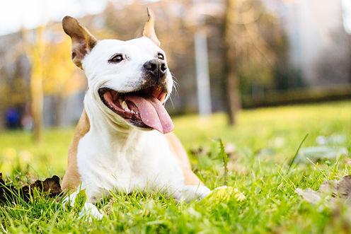 Dog enjoying the beautiful day.jpg