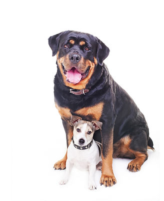 best friends, two dogs, a big dog rottwe