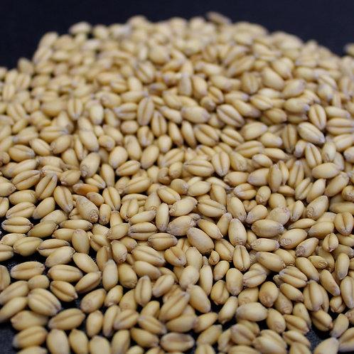 Organic Soft White Wheat (10lbs)