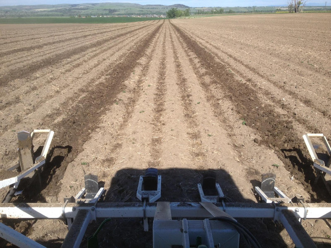 Culti-Dikers in Potato Beds