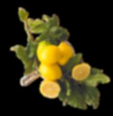 lemon flavour cake