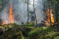 Devastating Californian Wildfires