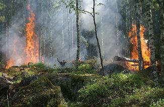 Fires in woods
