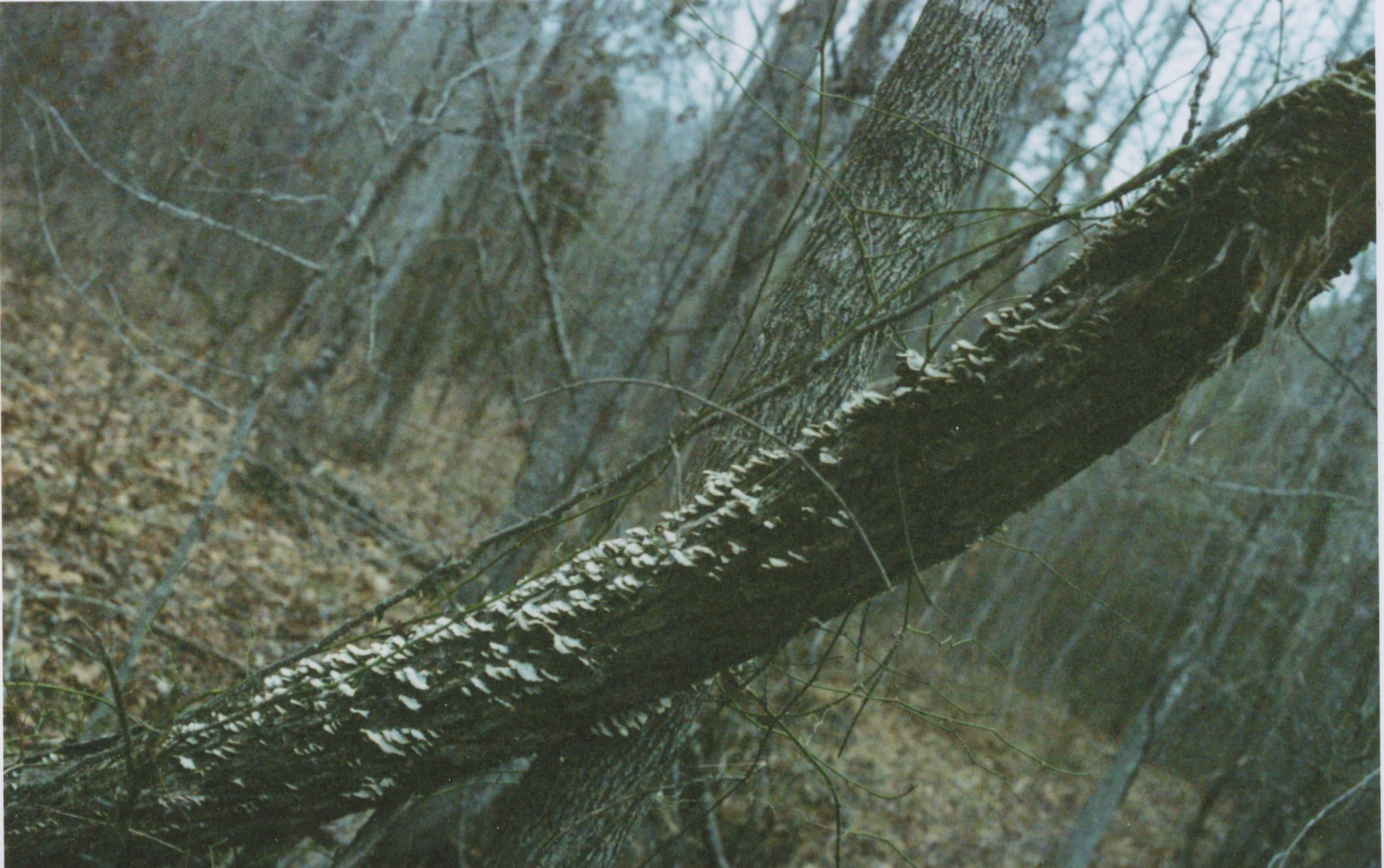 winter shots tree fungi