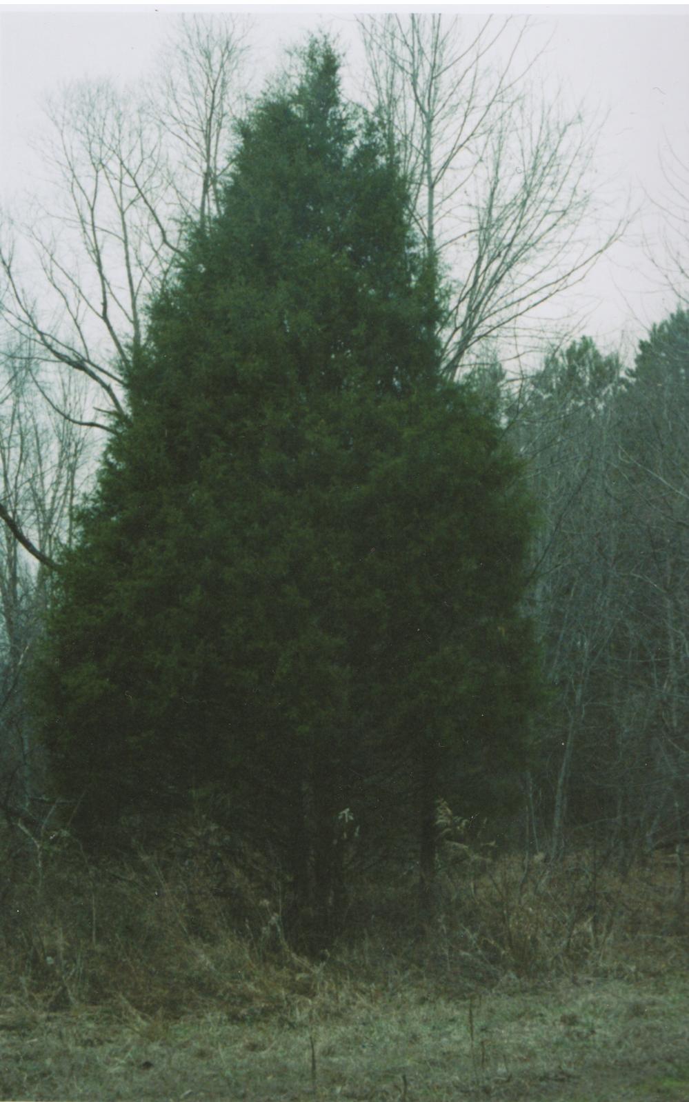 winter pics cypress