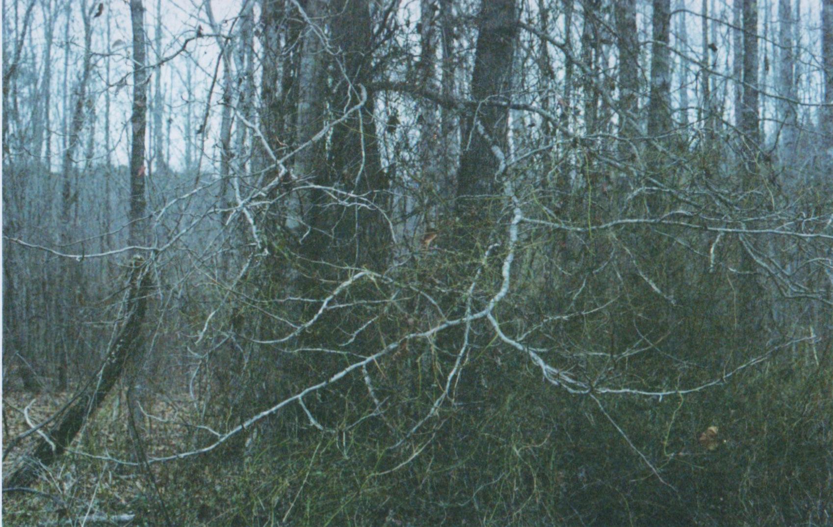 winter shots white branches