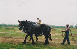 work horses kids