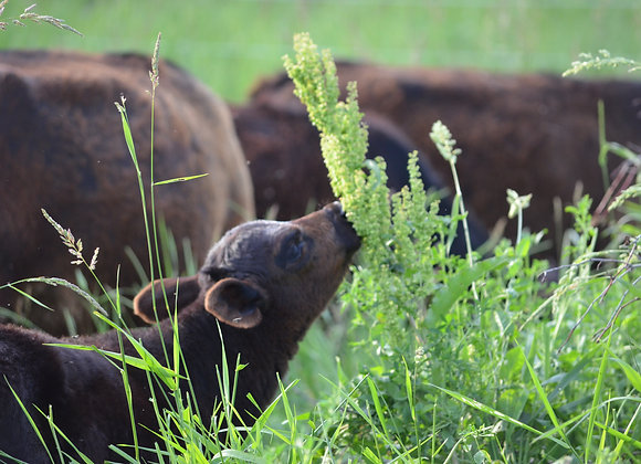 100% Grass Fed, Grass Finished Angus Beef