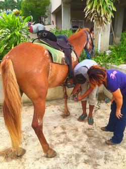 Pacia PR Equine Education