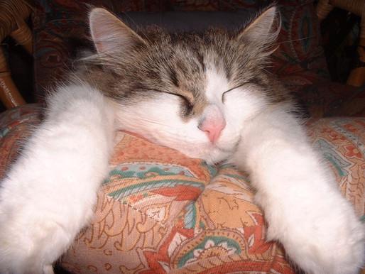 10 עובדות שאולי לא ידעתם על חתולים