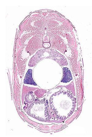 histology.jpg