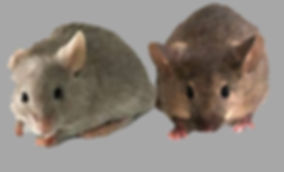 2 souris copie.jpg