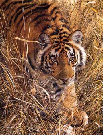 Tall Grass Tiger - Carl Brenders