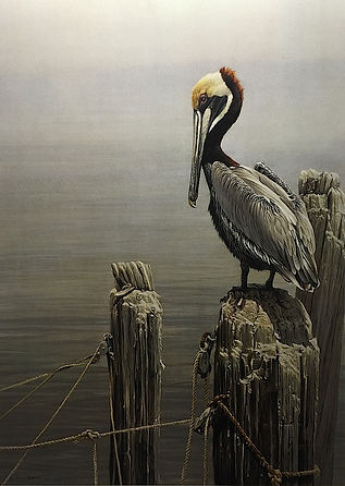 bateman-robert-brown-pelican-and-pilings