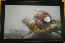 Vantage Point -Bald Eagle