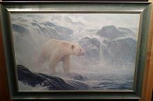 Salmon Watch - Spirit Bear