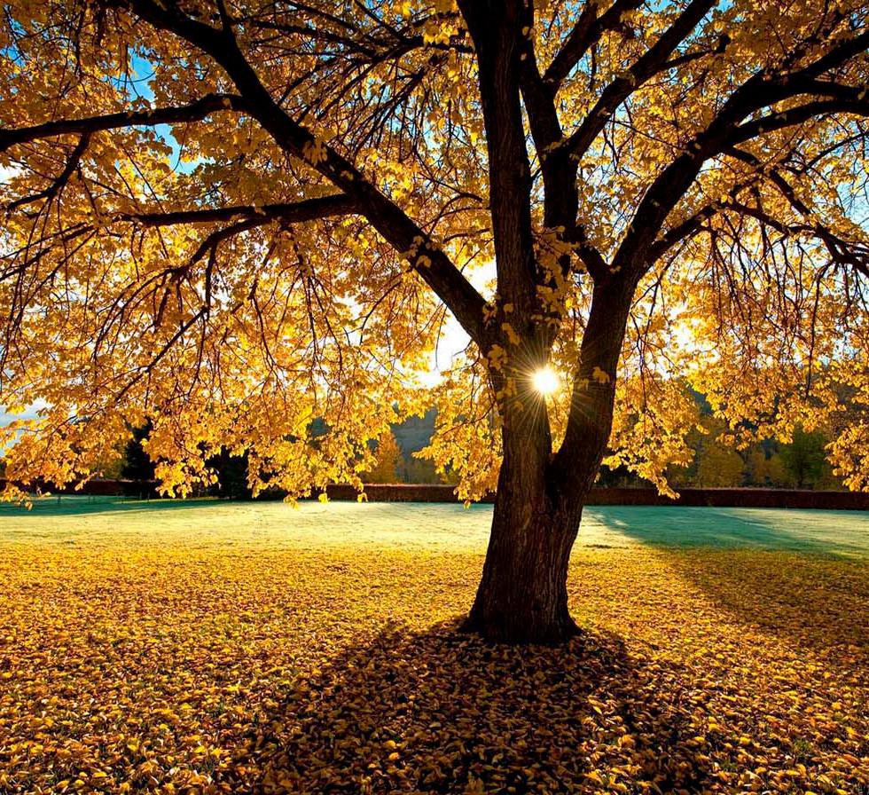 Treemendous - Color