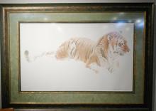 Watching - Siberian Tiger