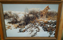 Coyote in Winter- Sage