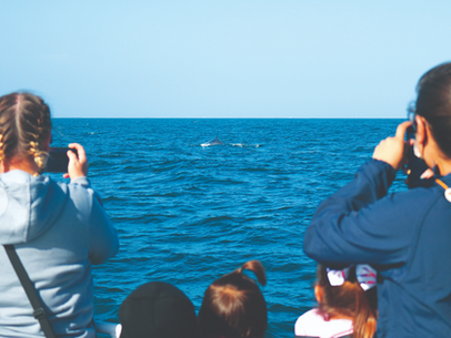 A Day At Sea - Aboard The Harbor Breeze Cruise Whale Watching Excursion!
